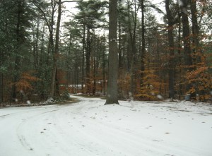 Snowy NH Woods