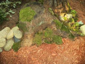 (photo by Virginia Allain) Here's a stump where I've applied moss and had it grow well.