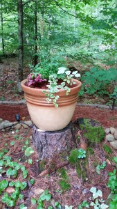 Here's a stump used to feature container plants.