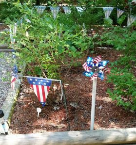 patriotic blueberry patch
