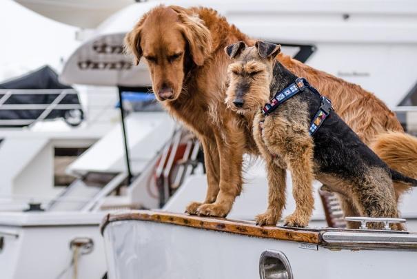 dogs-boat pixabay