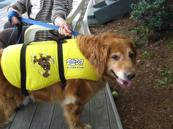 dog wearing a personal flotation device